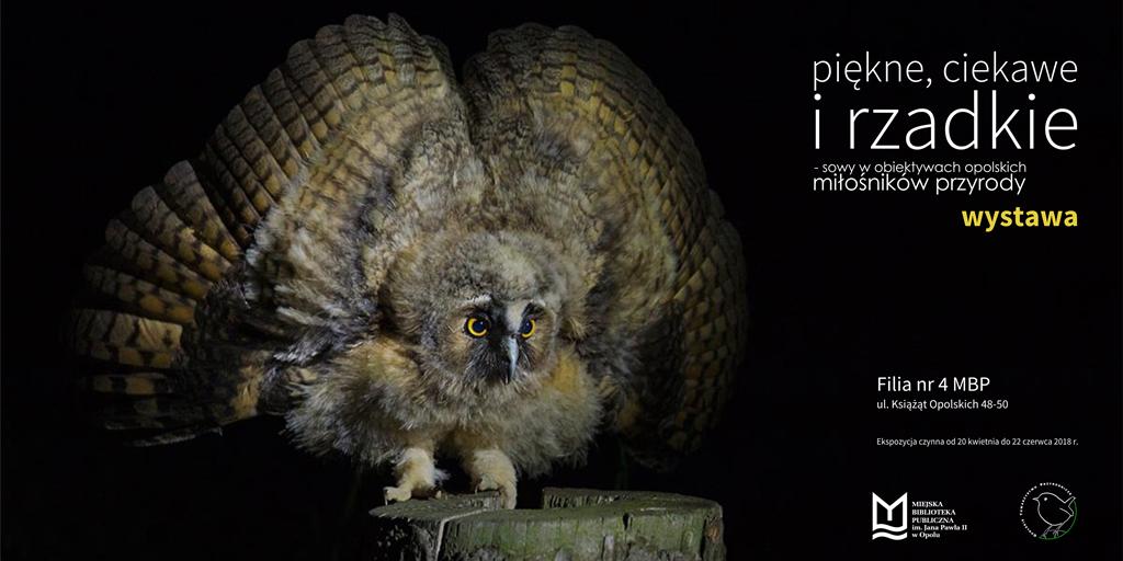 Piękne, ciekawe i rzadkie – sowy w obiektywach opolskich miłośników przyrody