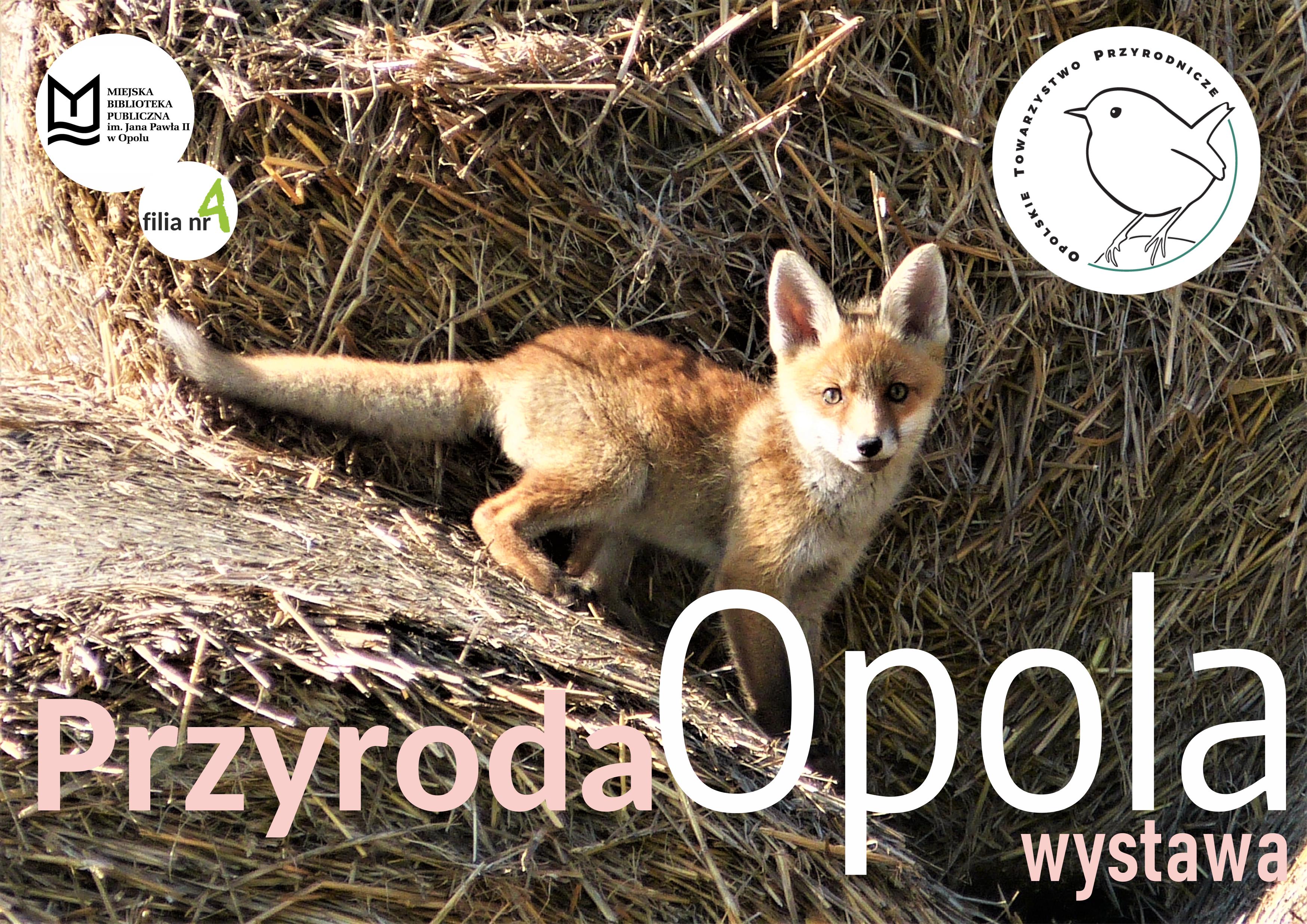 Przyroda Opola – wystawa zdjęć OTP